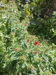 Im Garten blüht es. (2)