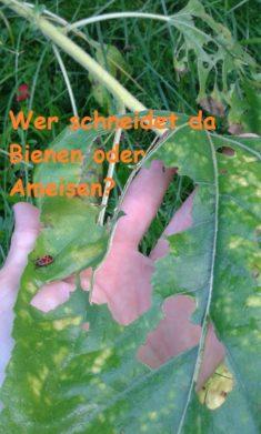 Baumaterial für die Innenarchitektur … ware das Blattschneiderbienen??
