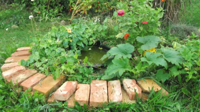 Wasserstelle für die Insekten wurde gerne bei der Hitze angeflogen