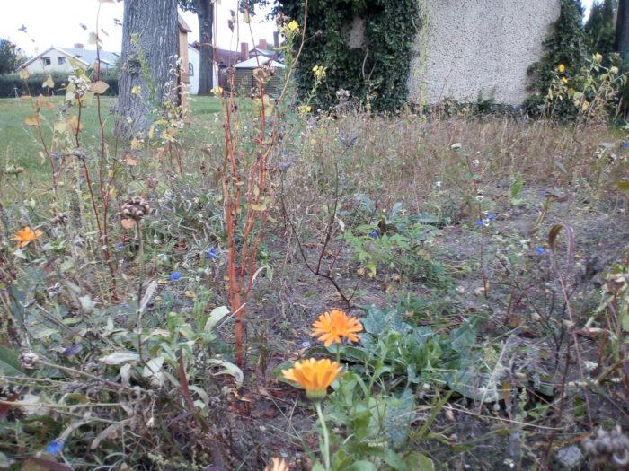 Die Bienenweide im Oktober
