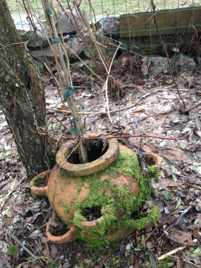 Naturgarten Hotzenwald: Tipp im Januar